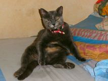 在alchol的猫frind 库存图片