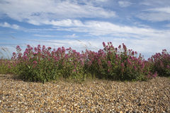 在Aldeburgh海滩,萨福克,英国的红色拔地响 图库摄影