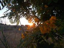 在Alhaurin de la Torre马拉加西班牙的秋天日落 免版税库存图片