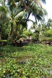 在Allepey,喀拉拉附近的死水 库存图片