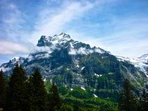 在Alpes山的夏天,瑞士 绿草和多雪的山峰对比  图库摄影