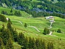 在Alpes山的夏天,瑞士 免版税库存图片