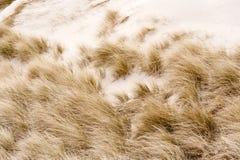 在Amrum的沙丘 免版税库存图片