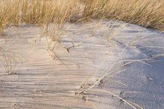 在Amrum的沙丘 免版税库存照片