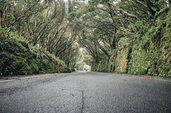 在Anaga联合国科教文组织生物圈储备的风景路,特内里费岛,西班牙 库存照片