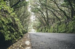 在Anaga联合国科教文组织生物圈储备的风景路,特内里费岛,西班牙 图库摄影