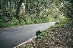 在Anaga联合国科教文组织生物圈储备的风景路,特内里费岛,西班牙 免版税库存图片