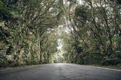 在Anaga联合国科教文组织生物圈储备的风景路,西班牙 库存图片