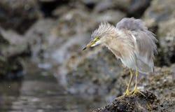 在ancol海滩雅加达的接近的鸟 免版税库存图片