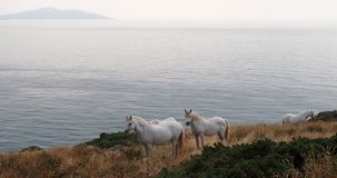 在Anglesey,威尔士的白马 免版税图库摄影