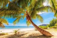 在Anse Volbert的棕榈在普拉兰岛海岛,塞舌尔群岛上靠岸 库存照片