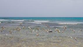 在Arashi海滩,阿鲁巴的飞行 鸟群在海的 图库摄影