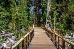 在Arrayanes国家公园-别墅La苦味液,巴塔哥尼亚,阿根廷的木板走道道路 免版税图库摄影