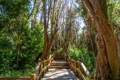 在Arrayanes国家公园-别墅La苦味液,巴塔哥尼亚,阿根廷的木板走道道路 图库摄影
