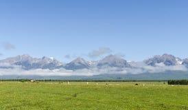在Arshan山前面的绿色medow 免版税库存图片