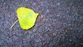 在asfalt路的叶子 图库摄影