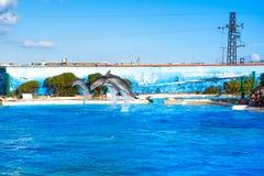 在Attica动物园的海豚停放,雅典,希腊 免版税库存图片