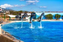 在Attica动物园的海豚停放,雅典,希腊 免版税库存照片