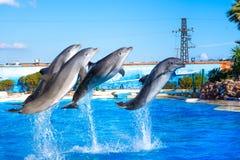 在Attica动物园的海豚停放,雅典,希腊 图库摄影