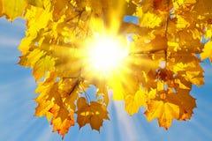 在autmn叶子的太阳 免版税库存照片
