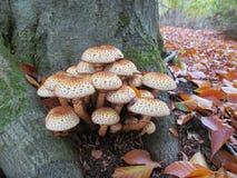在automn的蘑菇 库存图片