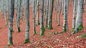在autum的树干 免版税图库摄影