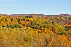 在autum的森林风景 库存图片