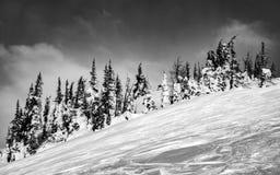 在B&W的雪盖的树 免版税库存图片