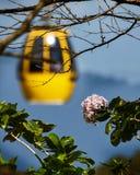 在Ba Na小山高山的花依靠 免版税图库摄影