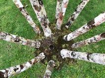 在Balatala庭院的树脚在马提尼克岛 免版税库存照片