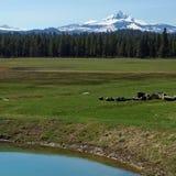 在baldy云彩之上cucamonga反映mt多雪的牧场的形状 在春天牧场地的华盛顿 免版税库存照片