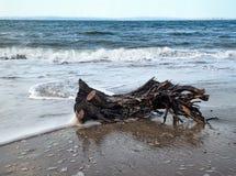 在Ballycastle海滩, Co的漂流木头 安特里姆,爱尔兰 库存照片