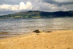在Ballycastle海滩, Co的漂流木头 安特里姆,爱尔兰 免版税库存照片