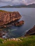 在Ballydavid附近的峭壁,幽谷半岛,爱尔兰 免版税库存图片