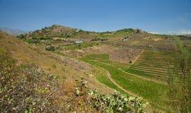 在Bandama附近的葡萄园 库存照片