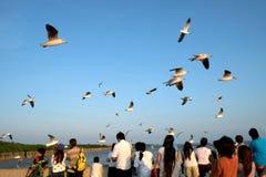 在Bangpoo手段, Samutpharkan泰国的日落 库存照片