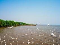 在Bangpoo,泰国的观看的海鸥 时数横向季节冬天 免版税库存图片