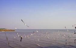在Bangpoo,泰国的观看的海鸥 时数横向季节冬天 库存照片
