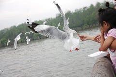 在Bangpu,泰国12月27日的一只女孩哺养的海鸥20014没有模型 免版税库存图片