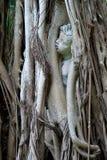 在banyon树困住的孩子雕象 免版税库存照片