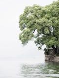 在湖旁边的树 图库摄影