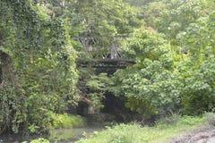 在barangay Tiguman的Tiguman桥梁, Digos市,南达沃省,菲律宾 免版税库存图片