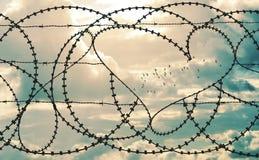 在barbwire的心脏在cloudscape背景中构筑鸟群  免版税库存图片
