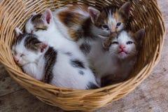 在basket#1的小猫 免版税库存照片
