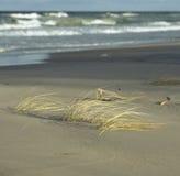 在beach.JH的芦苇 免版税库存照片