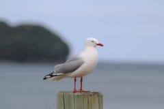 在beachpole等待的吃饭的客人的海鸥 库存照片