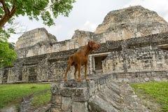 在Becan考古学站点尾随身分在尤加坦墨西哥 库存照片