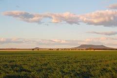 在Bellata, NSW,澳大利亚肥沃平原的年轻绿色麦子  库存照片