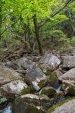 在Beomeosa寺庙旁边的岩石小河在釜山 免版税库存照片