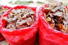 在Beserah,马来西亚的海鲜快餐 库存图片